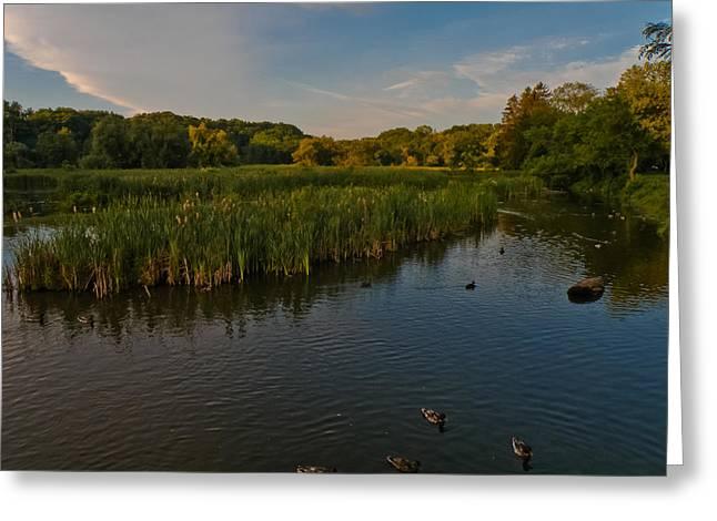 Summer Duck Pond Greeting Card by Jiayin Ma