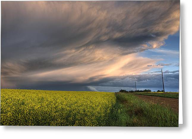 Summer Evening Storm Blowing Over Ripe Greeting Card by Dan Jurak