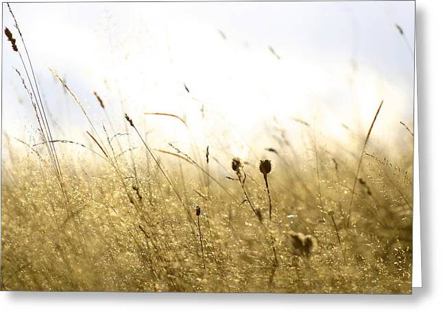 Summer Field Greeting Card by Emanuel Tanjala