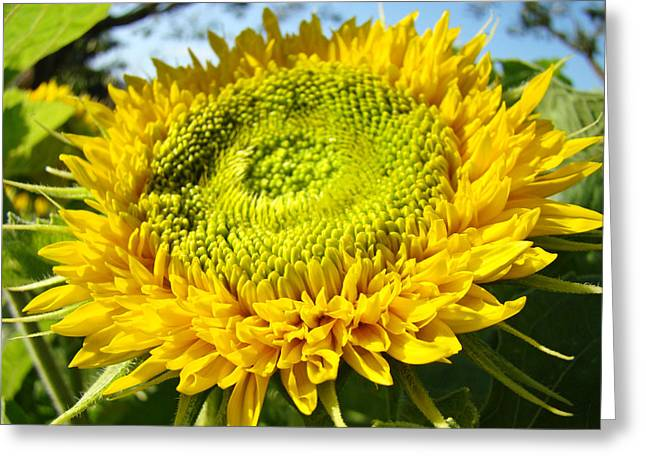 Summer Floral Art Prints Yellow Sunflower Greeting Card by Baslee Troutman