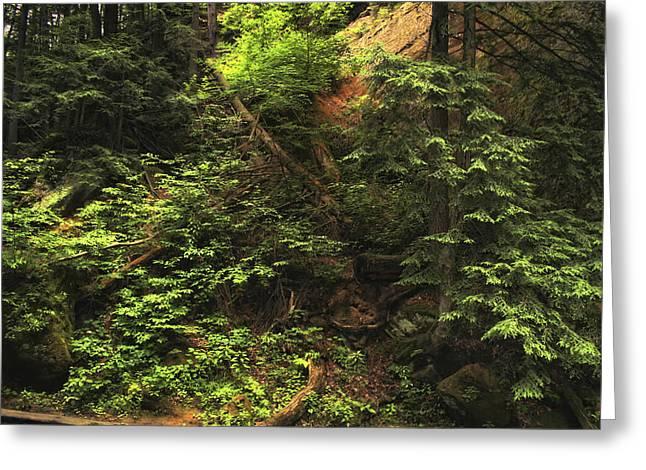 Summer Foliage Greeting Card by Richard Gregurich