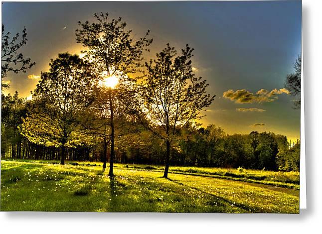 Summer Glow Greeting Card by Jason Naudi Photography