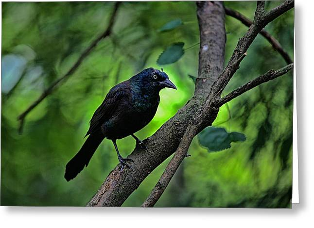 Summer Grackle Greeting Card