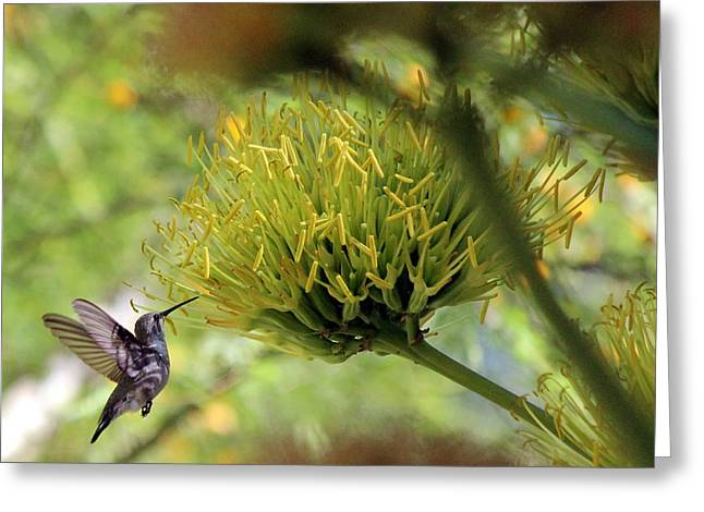 Greeting Card featuring the photograph Summer Hummer by Jo Sheehan