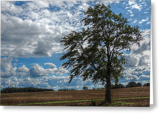 Summer In The Country Greeting Card by Shon Saylor
