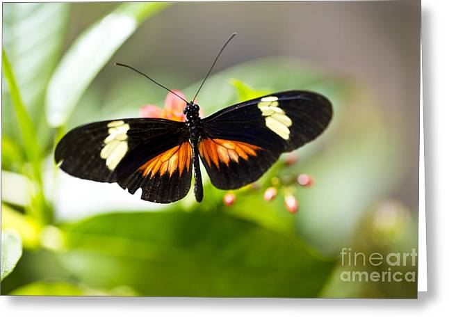 Greeting Card featuring the photograph Summer Love by Leslie Leda