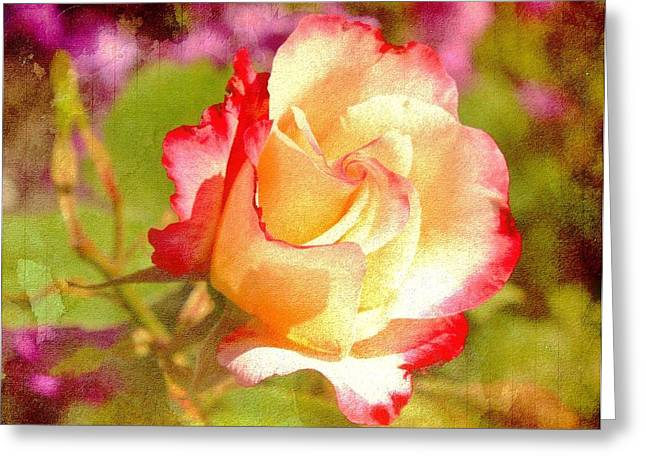 Summer Rose With Texture Greeting Card