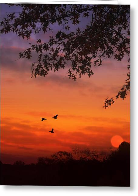 Summer Side Of Life Greeting Card by Tom York Images