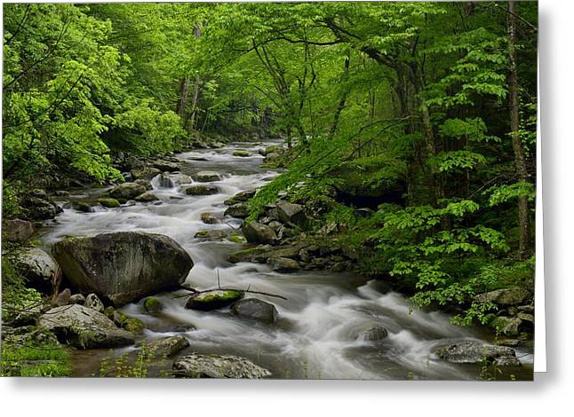Summer Stream In Great Smoky Mountains  Greeting Card by Darrell Young