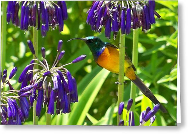 Greeting Card featuring the photograph Sun Bird by Lynn Bolt