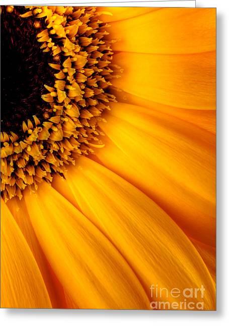 Sun Burst - Sunflower Greeting Card by Martin Williams