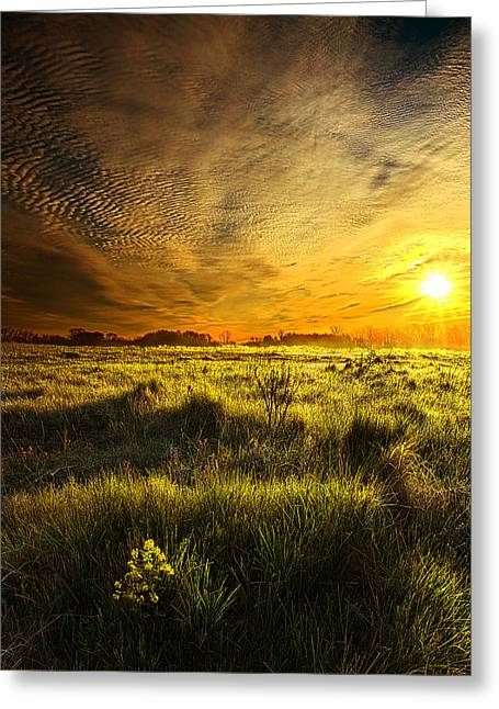 Sun Chaser Greeting Card by Phil Koch