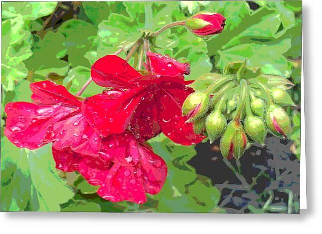 Sun Dappled Geranium Flowers After Rain Greeting Card by Padre Art