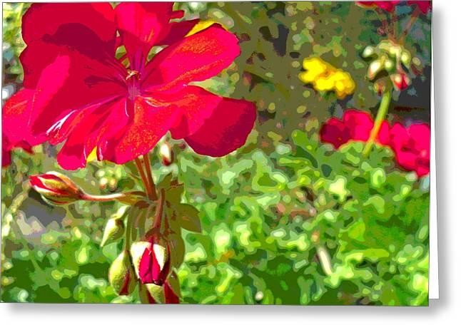 Sun Dappled Geranium Flowers And Green Foliage Greeting Card