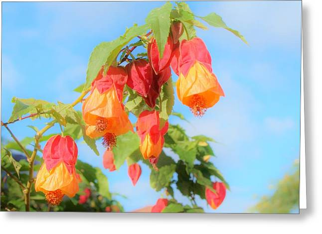 Sun Drenched Bell Flower Greeting Card