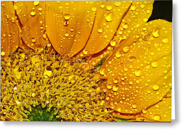 Sun Flower Greeting Card by Michelle Armstrong