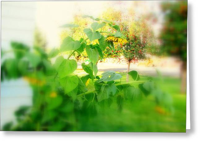 Sun Flowers Leaning Downward Greeting Card by Amy Bradley