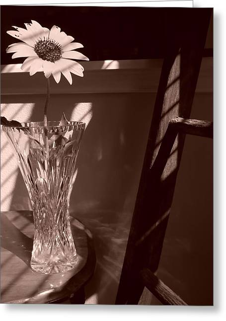 Greeting Card featuring the photograph Sun In The Shadows by Lynnette Johns