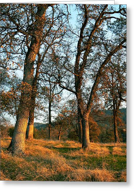 Sun Kissed Oaks Greeting Card by Pamela Patch