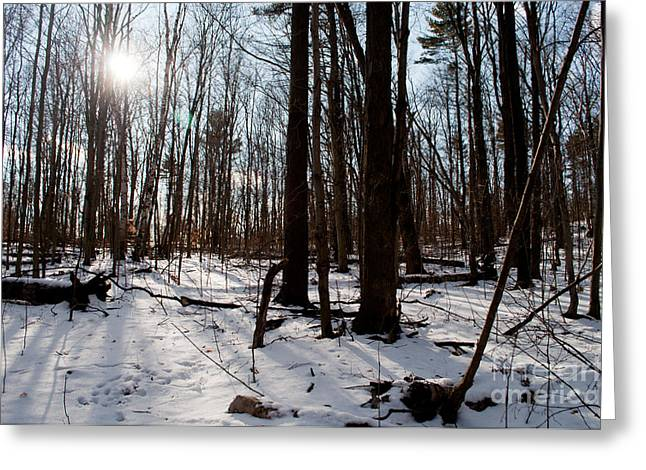 Sun On The Wild Turkey Trail Greeting Card by Gary Chapple