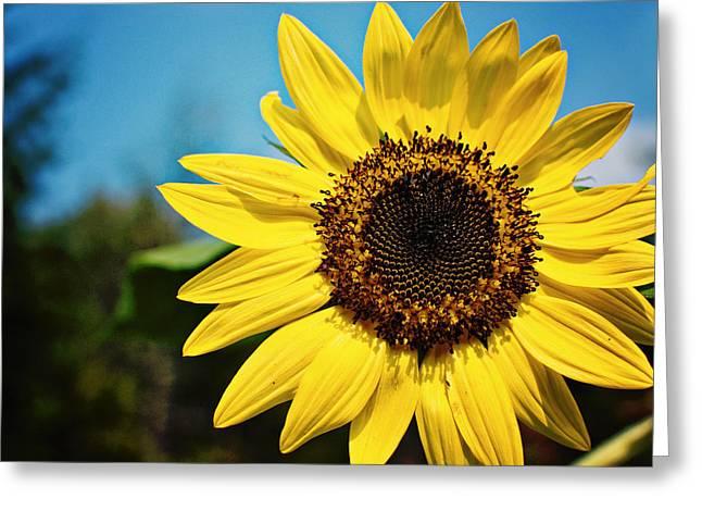 Sun Greeting Card by Robin Morse