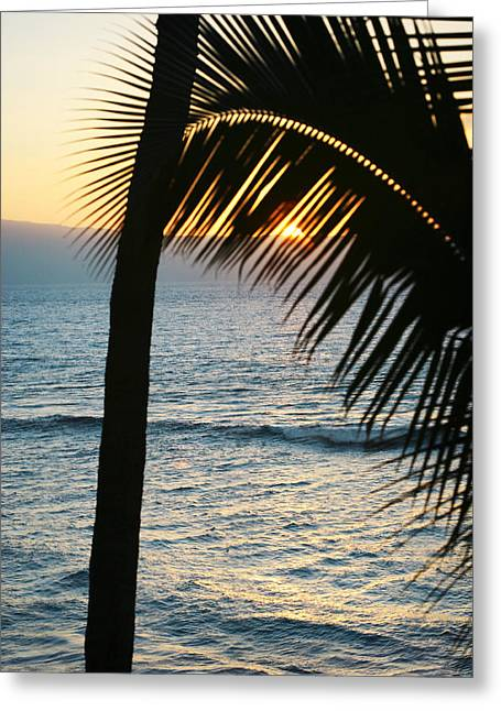 Sun Setting Behind The Palm Greeting Card by Marilyn Hunt