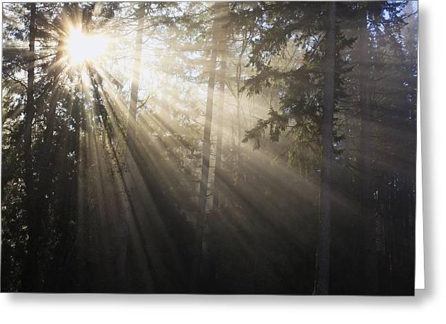 Sun Shining Through Morning Fog And Greeting Card