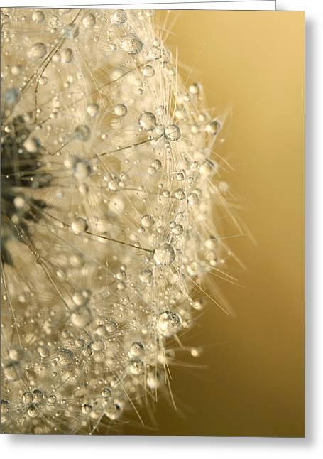 Sun Sparkled Dandy Greeting Card by Sharon Johnstone