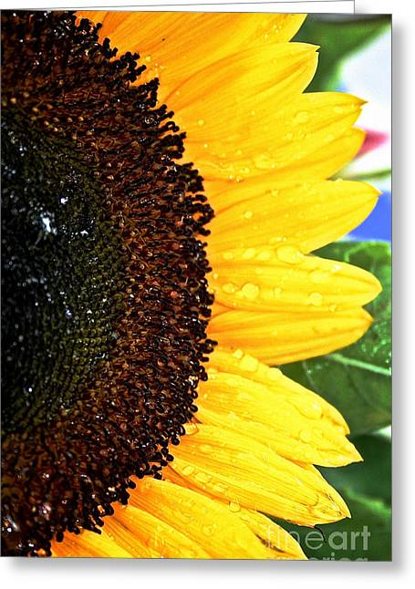 Sun Sparkles Greeting Card by Susan Herber