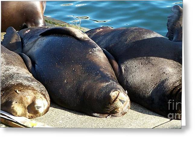 Greeting Card featuring the photograph Sunbathing Sea Lions by Chalet Roome-Rigdon