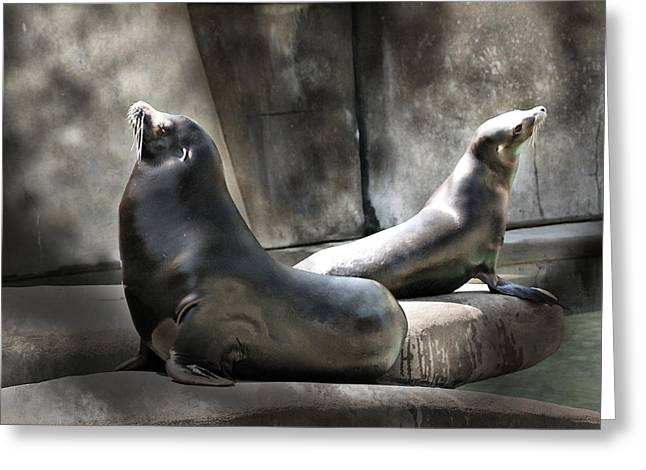 Greeting Card featuring the photograph Sunbathing Seals by Mary Almond