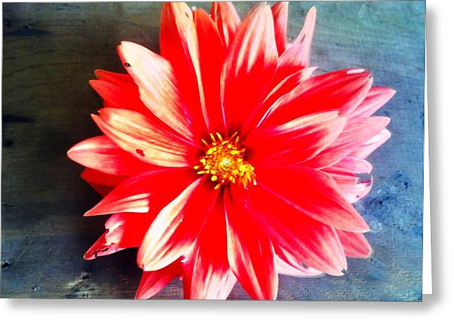 Greeting Card featuring the photograph Sunburst by Janice Spivey