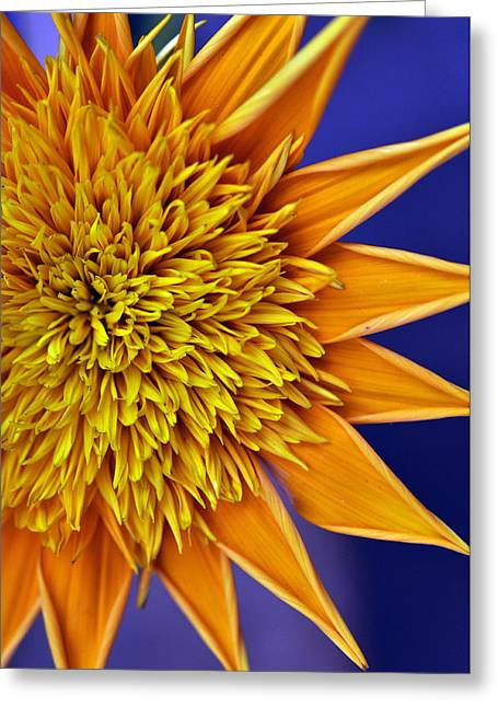 Sunburst Greeting Card by Sandy Fisher