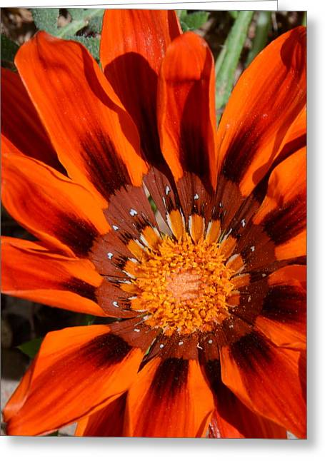 Sunburst Greeting Card by Whispering Dove
