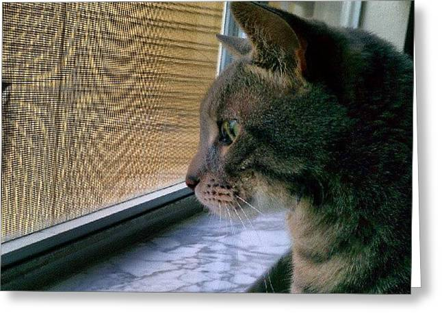 #sunday #cat #kitty #window #gaze Greeting Card by Arayon Shaw