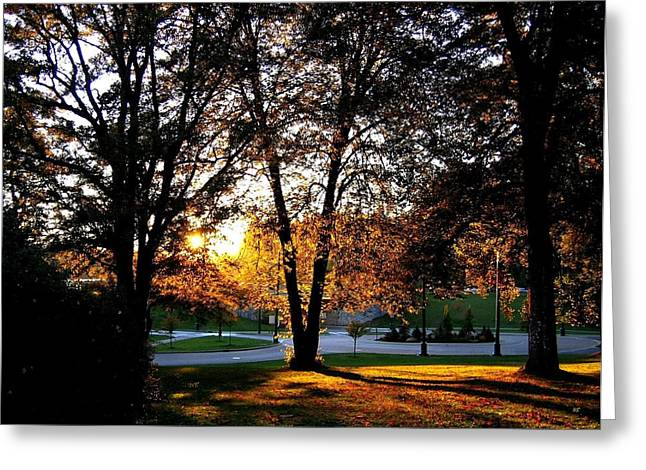 Sundown In Stanley Park Greeting Card by Will Borden
