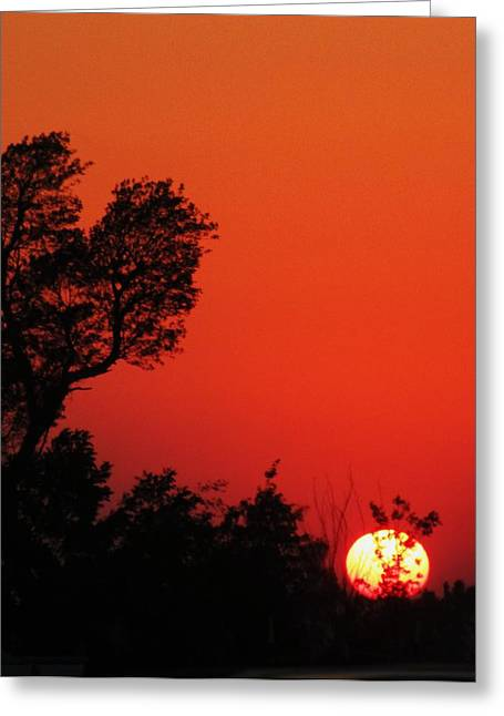 Sundown Greeting Card by Todd Sherlock
