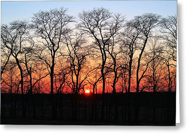 Sunfire Canopy  Greeting Card by Peter Chilelli