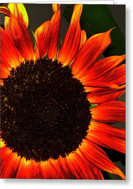 Greeting Card featuring the photograph Sunfire by Ramona Johnston