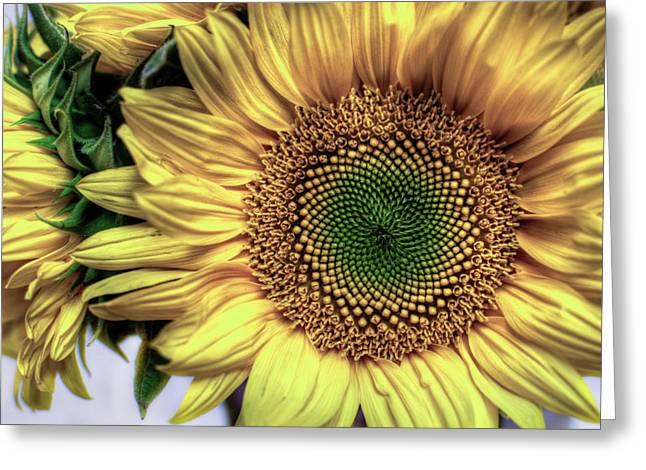 Sunflower 28 Greeting Card