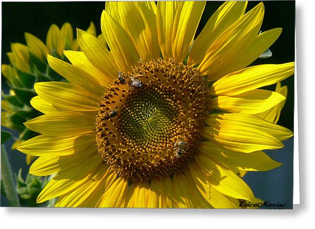 Sunflower 4 Greeting Card by EricaMaxine  Price