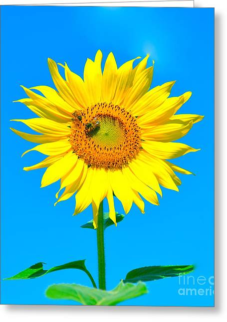 Sunflower And Bee Greeting Card by Debbi Granruth