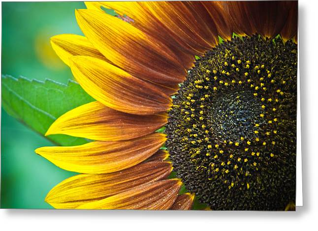 Sunflower Beauty Greeting Card