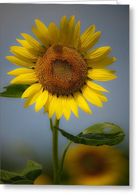 Sunflower Bow Greeting Card