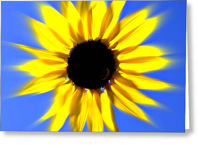 Sunflower Burst Greeting Card by Marty Koch