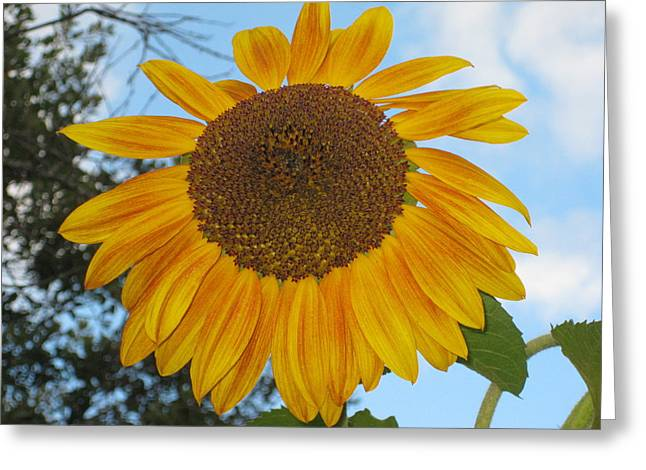 Sunflower Greeting Card by Carolyn Reinhart
