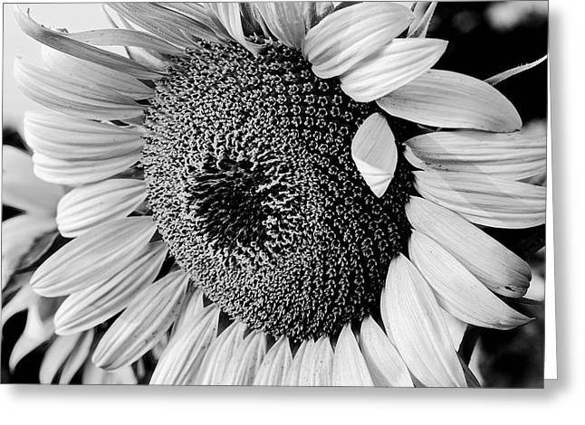 Greeting Card featuring the photograph Sunflower by Dan Wells