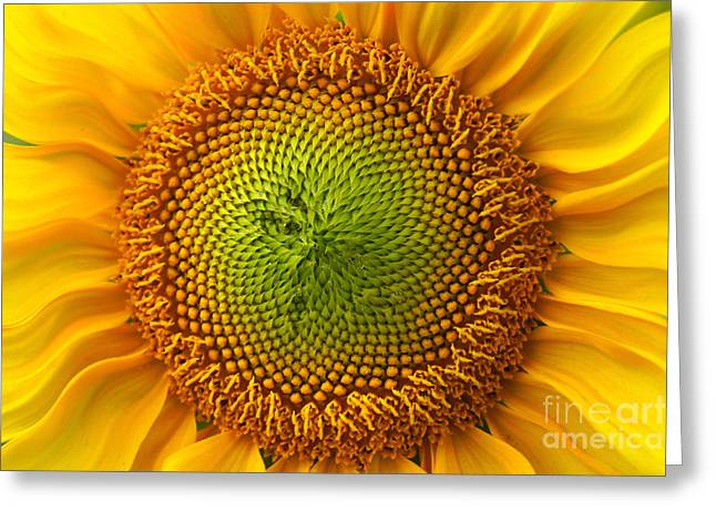 Sunflower Fantasy Greeting Card by Benanne Stiens