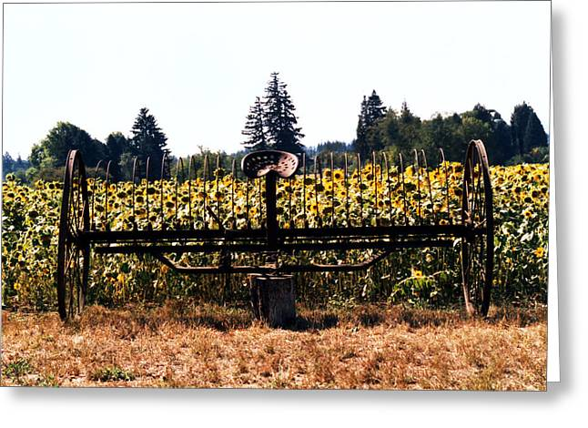 Sunflower Farm Scene Greeting Card