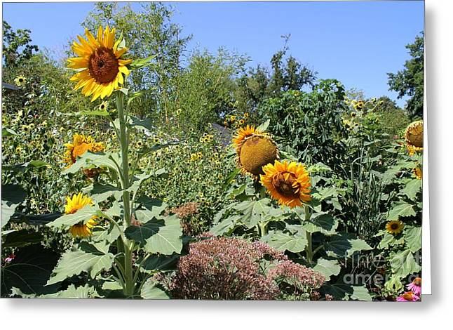 Sunflower Garden Greeting Card by Theresa Willingham